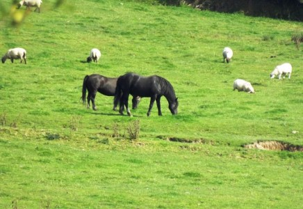 Image for Westland Farm
